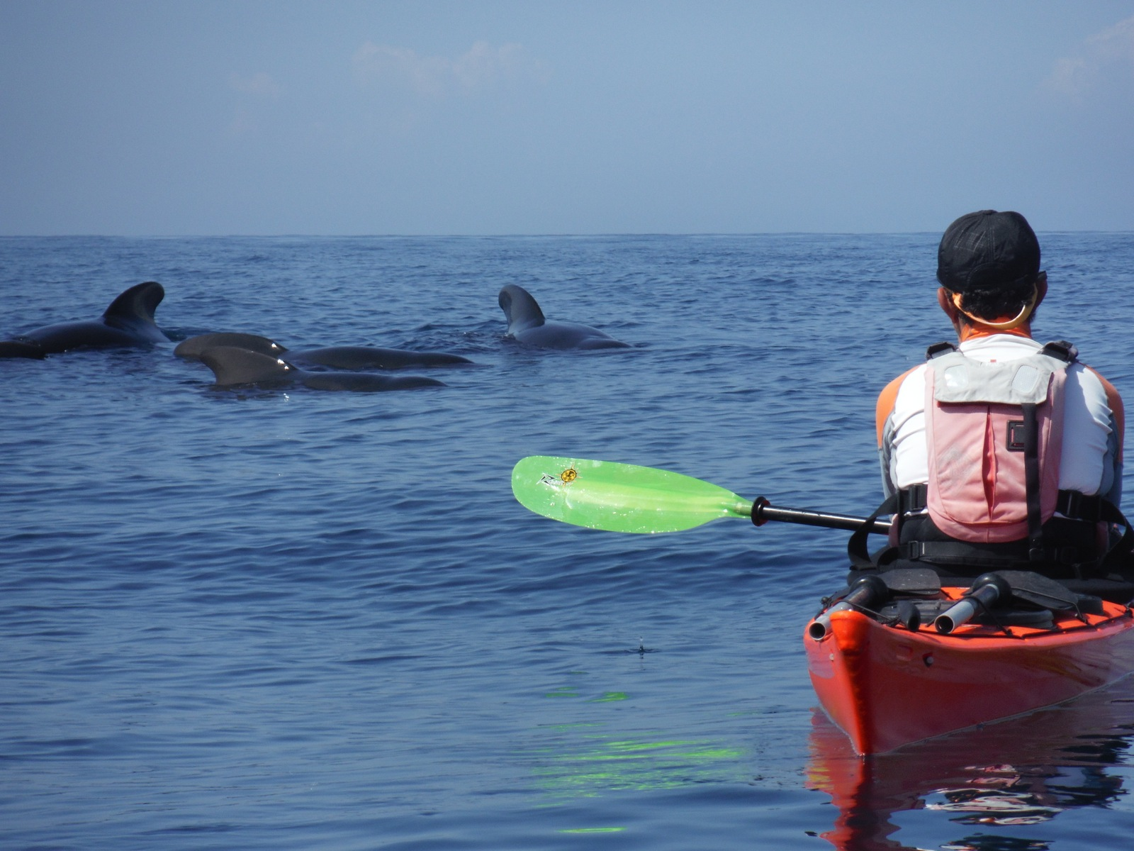 whale-in-route-kayak-cabo-palos
